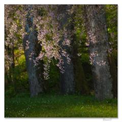 Jar plná kvetov