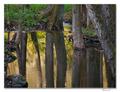 Zrkadlo tône potoka