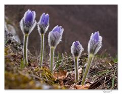 Jarné kvetiny
