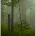 Bukové pralesy svetového dedičst