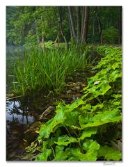 Ráno pri Veľkom rybníku