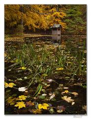 Jazierko v jeseni