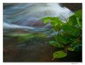 V prúde potoka