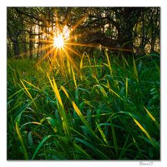 Svetielka v tráve