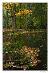 Jeseň pri Malom rybníku