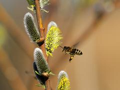včielky už v plnej poľnej