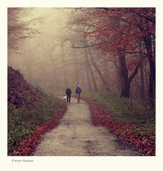 Prechádzka do jesene