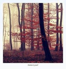 Neskorá jeseň