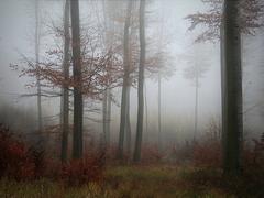 Karpatská jeseň