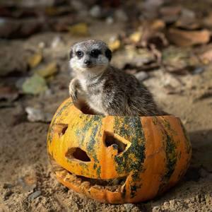 Po halloweenskom fláme ...