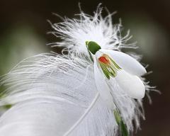 Biela krása
