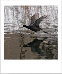 Vtáky po vodách ...
