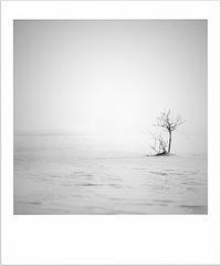 snehová samotka