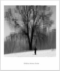 Strážca stromu