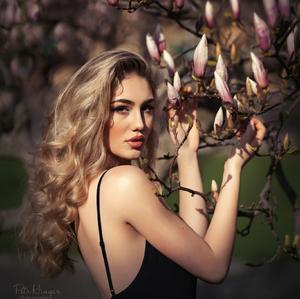 The Dream of Magnolia..