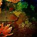 Colors of Murena