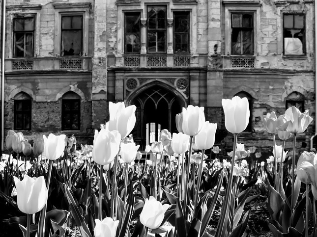 Spring in abandoned mansion