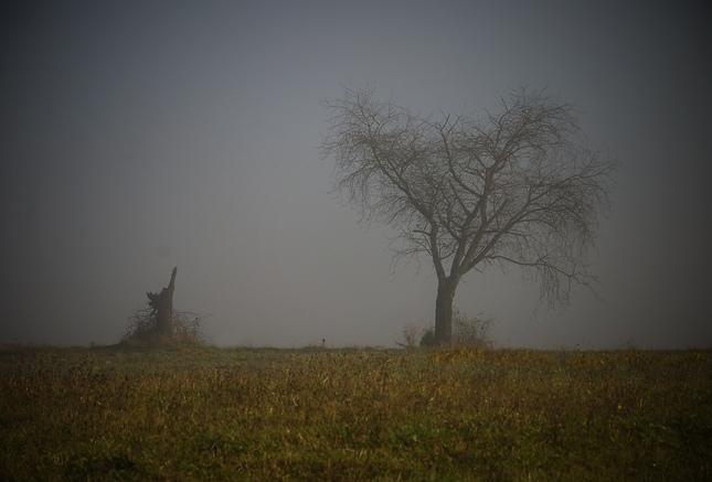 cesta stromu