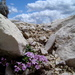 aj skaly niekedy zakvitnú