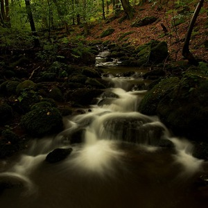 potôčik v lese