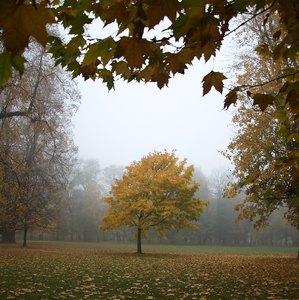 hmla v parku