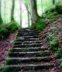 schody do lesa