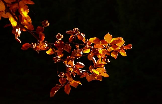jesenný pozdrav