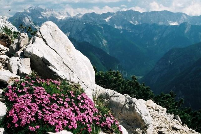 Alpská krása