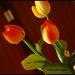 aj v zime máme tulipány ;)