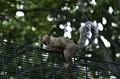 Veverička 1