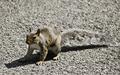 Veverička 2