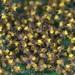 Čierna mora arachnofóbika