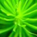 Zelená jemnosť