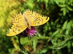 Motýľ z Vydrova