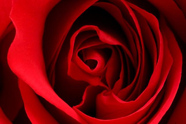 Lupene ruze....