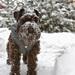 Merlin jako sněhulák