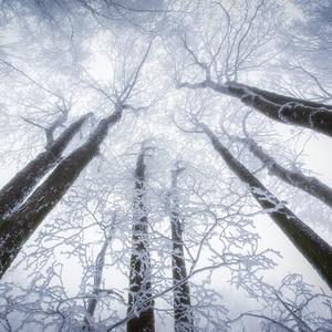 -V korunách stromov-