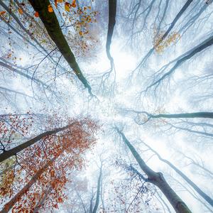 - Neskorá jesen  II-