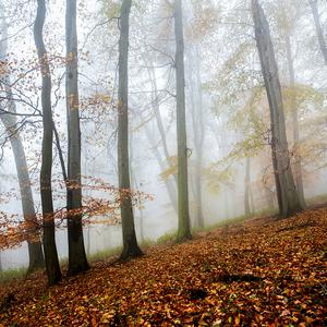 -Jesen-