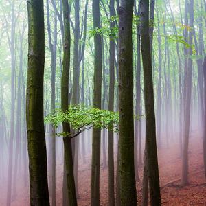 -Geometria lesa-