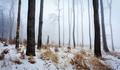 -Zimný les-