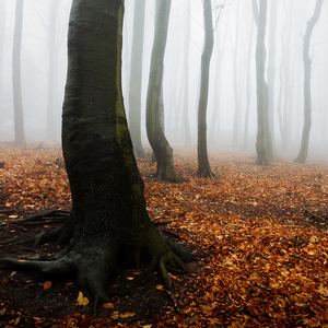 -Lesný chrám-