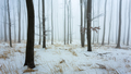 -Zimný les II-