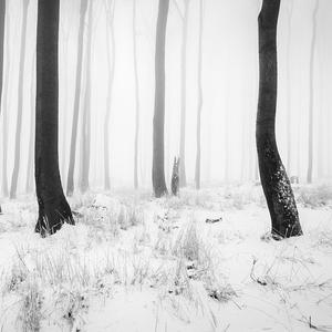- Čierna a biela-