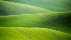 -Zelený koberec-