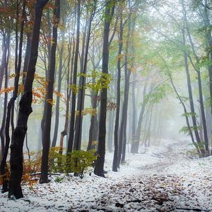 -Jesenná harmónia-