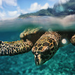 Na Seychelach