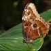 Motýlia výstava