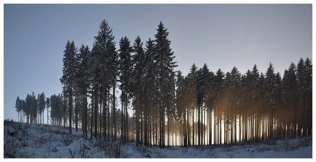 lesovka