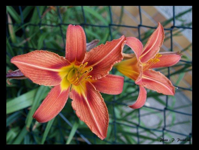 Kvetinka 2